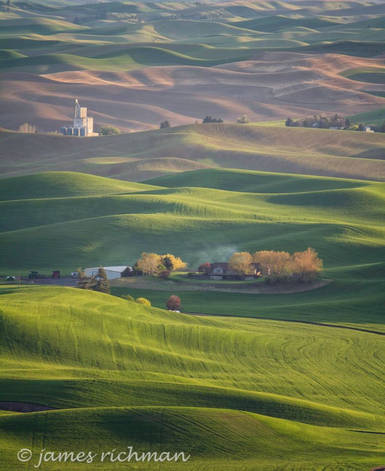 Palouse Ecological Disaster